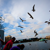 ORLANDO, FL -- Children feed the birds along Lake Eola in downtown Orlando, Fla., on Friday, January 27, 2012. As the Florida Primary approaches, the voters along the I-4 corridor are becoming an increasingly more important path to securing a win.  (Chip Litherland for The New York Times)