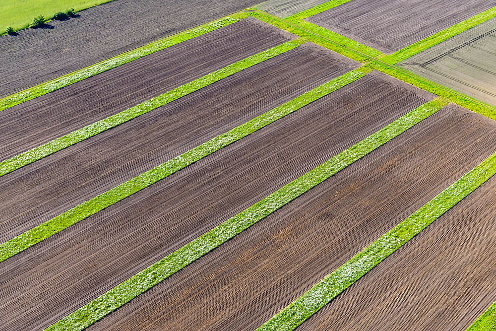 Nederland, Utrecht, De Groep, 29-05-2019; akkers en aanplant , landelijk gebied in de Utrechtse heuvelrug.<br /> Fields and planting, rural area in the Utrecht ridge.<br /> luchtfoto (toeslag op standard tarieven);<br /> aerial photo (additional fee required);<br /> copyright foto/photo Siebe Swart