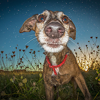 Images of Amber and Compo Highlights of images of dogs in the outdoors, by specialist dog photographer Rhian White.