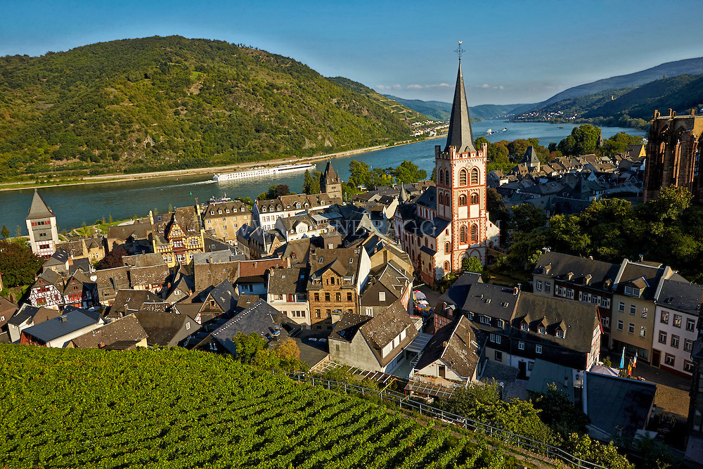 Romantic Rhine view of St. Peter's Protestant Church, Werner Chapel Ruins, Rhine River, vineyards, Rhine River Cruise, and rolling hills, Bacharach, Germany.