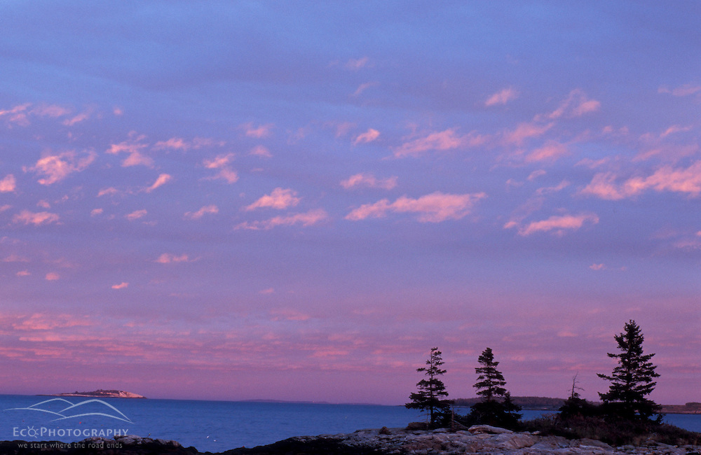 Southport Island, ME.... Spruce trees silhouetted against the sunset sky at the southern end of Southport Island.  Boothbay Harbor