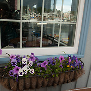 Flower window box on Bearskin Neck in Rockport, Massachusetts