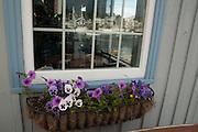 Flower window box on Bearskin Neck in Rockport, Massachusetts