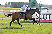 BORN SURVIVOR (5) ridden by Harry Skelton and trained by Dan Skelton winning The Listed (Class 1) Hillhouse Quarry Handicap Steeple Chase over 2m 4f (£50,000)during the Scottish Grand National, Ladies day at Ayr Racecourse, Ayr, Scotland on 12 April 2019.