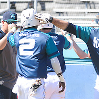 UNCW's Zach Shields is greeted by teammate Terence Connelly after scoring a run against Maryland Sunday March 8, 2015 at Brooks Field. (Jason A. Frizzelle)