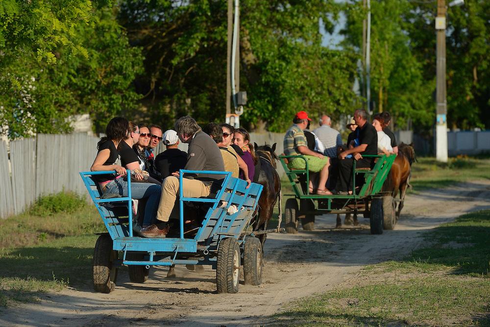 Tourism in the delta, horse wagon trip, Letea, Danube delta rewilding area, Romania