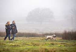 © Licensed to London News Pictures. 22/01/2020. London, UK. Walkers enjoy the dense fog in Richmond Park this morning. Another foggy start for Londoners in Richmond as forecasters predict lingering fog and milder weather for the week ahead. Photo credit: Alex Lentati/LNP