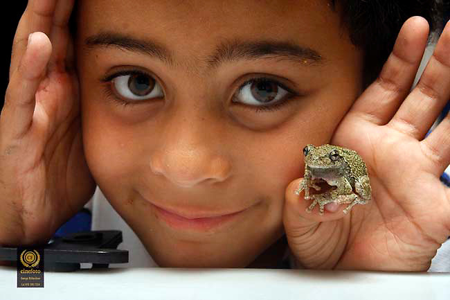 07/09/2015, Bradford-Haverhill: George Iker Richardson, 6, proudly shows a Grey Treefrong fund in Bradford-Haverhill <br />