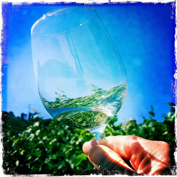 Wine glass reflection Sonoma, California.