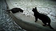 Kattskulpturer i Dalen, Enskede.