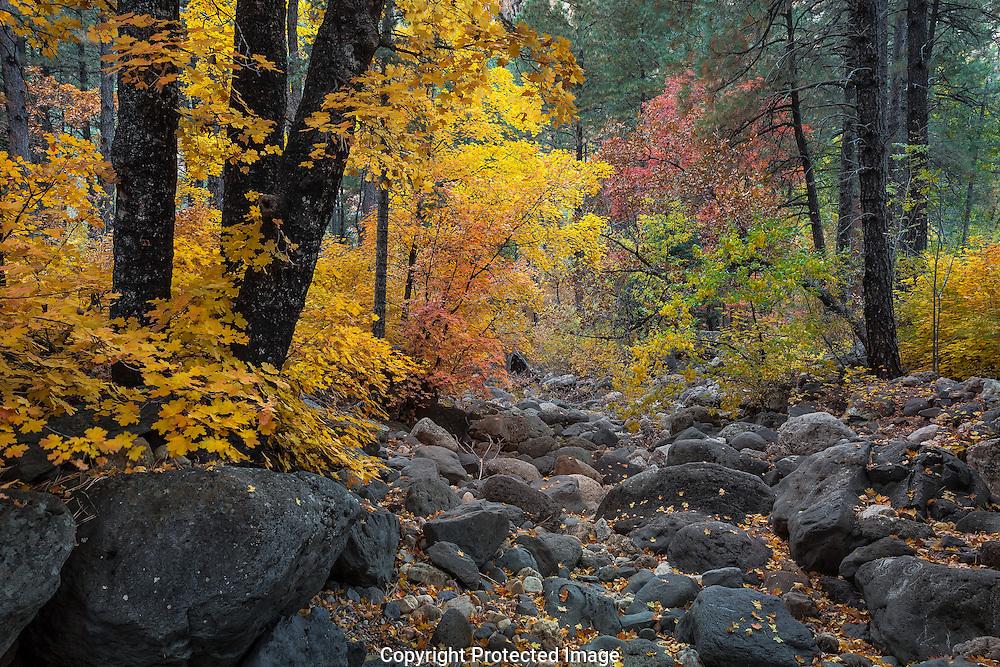 Oak Creek Canyon, autumn, Sedona, AZ