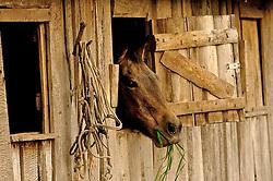 Cavalo na janela da estrebaria. FOTO: Jefferson Bernardes/Preview.com