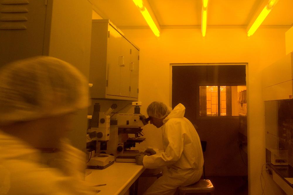 Belo Horizonte_MG, Brasil...Laboratorio de producao de chip magnetico no Instituto de Ciencias Exatas(ICEX) da UFMG, na foto pesquisador com microscopio...The Laboratory production of magnectic chip in Instituto de Ciencias Exatas(ICEX) of UFMG, in this photo the researcher with microscope...Foto: VICTOR SCHWANER /  NITRO