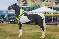 Grandes Campeões Mangalarga Equinos