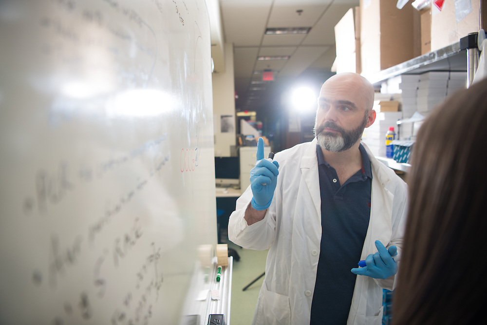 Ronan Carroll, Assistant Professor in the department of Biological Sciences, works with students in his lab in the Life Sciences Building on the Athens campus. © Ohio University/ Photo by Ben Siegel