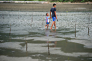 Two boys walk among replanted mangroves on the beach after collecting oysters in a town not far from Banda Aceh on November 24, 2014 in Lampuuk, Indonesia. The international community has been helping since the 2004 tsunami to help plant a green buffer zone to help slow waves from the Indian Ocean. Ann Hermes/© The Christian Science Monitor 2014