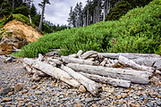Behind the Sitka spruce driftwood, is the entrance to the Indian Beach access trail, which forms a tunnel through the dense Salal shrub back up to the day visitor parking area at Ecola State Park, near Cannon Beach, Oregon