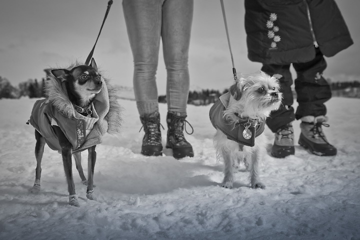 "Lea Jones with ""Cricket"", a four year old Chihuahua/minpinscher and Stacey Scott with ""Bono"", a four year old Chihuahua/shih tzu near Westchester Lagoon, Anchorage"