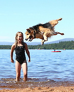 28/07/2011<br /> EXCLUSIVE<br /> Sit, heel... now jump 6ft in the air and spin! The leaping dog who may be a world record breaker<br /> <br /> He's named after one of Santa's flying reindeer – and Blitzen the collie is certainly living up to his billing. <br /> Putting a new spin on 'walkies', the four-year-old rescue dog appears to be soaring through the air as he leaps and twists athletically in the water.<br /> Owner Stacy Clark, 44, says he reaches 6ft – topping the 5ft 8in world record for a canine jump.<br /> 'He hasn't been trained to do it,' said the mother of two, of Marykirk in Aberdeenshire. 'It's entirely his thing. <br /> <br /> 'The children splash water in the air and he just loves to try to catch it.