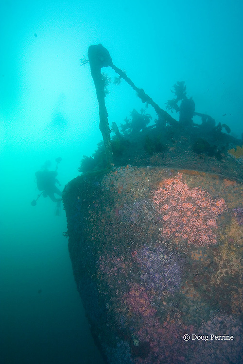 underwater photographer explores the stern of the Rainbow Warrior wreck, Cavalli Islands, off North Island, New Zealand ( South Pacific Ocean )