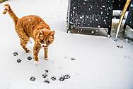 ROTTERDAM - sneeuw in rotterdam zuid in de wijk katendrecht Het KNMI heeft code oranje afgegeven voor zondagochtend wegens verwachte 'flinke' sneeuwval en gladheid. Zondagochtend trekt een gebied met flinke sneeuwval vanuit het zuidwesten het land binnen. ROBIN UTRECHT