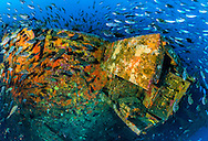 Underwater panorama near the stern end of the Rena shipwreck at 35 metres, the fish life is prolific, when the current is running. Underwater panorama is made up of six fisheye images. <br />