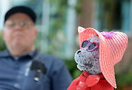 Ken Keene Sr.'s stuffed bear sits by while he speaks about living with early onset dementia Thursday, August 31, 2017 at the Delaware Valley Veterans Home in Philadelphia, Pennsylvania. (WILLIAM THOMAS CAIN / For The Philadelphia Inquirer)