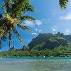 Beautiful Cook's bay on a sunny day with on the foreground some palmtrees, Moorea, French-Polynesia.