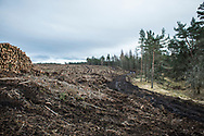 A muddy harvester track leads up through a  site of clearcut forest in Scotland, near Inverness following forestry operations.