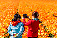 LISSE - tourist visit the world famous flowerfields in the netherlands tullips ROBIN UTRECHT<br /> <br /> LISSE bollenvelden staan in de bloei tijdens de lente bloembollen , bollenvelden , toeristen , toerist in , bloei , staan , Tourist between the flowerfields in the netherlands Drukte in de Bollenstreek. Er kwamen weer veel toeristen uit binnen- en buitenland naar de bollenvelden en Keukenhof. Bezoekers maken fotos van kleurrijke tulpen in de bloeiende bollenvelden rond de Keukenhof. <br /> bollenvelden van de Keukenhof in volle bloei. 2017 68 68e 68ste achtenzestigste attractie bezienswaardigheid bloei bloeien bloem bloemen bloemenpark bloemententoonstelling bloementuin bol bolgewas bollen bollenstreek bollenvelden editie evenement expo expositie flora gewas holland in jaarlijks jaarlijkse keer keukenhof landbouw landbouwevenement landbouwproduct lente lente2017 luchtfoto luchtopname natuur nederland nederlandse overzicht park plant planten plantenrijk seizoen tentoonstelling toerisme toeristenseizoen toeristisch toeristische tourisme touristisch touristische traditie tuin tuinbouw tuinen uitzicht voorjaar voorjaar2017 copyright robin utrecht