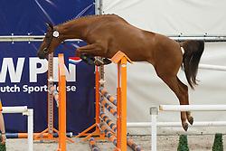 111 - Gyfonie<br /> Vrijspringen 3 jarige Merries<br /> KWPN Paardendagen - Ermelo 2014<br /> © Dirk Caremans