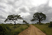a dirt track and storm clouds in Tarangire National Park, United Republic of Tanzania, Tarangire Park is located about 120km from Arusha, south east of Manyara.