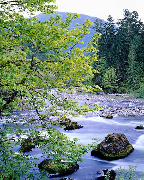 Elwha River, Olympic National Park, WA / #WSH104