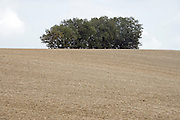 plowed field with trees in the background