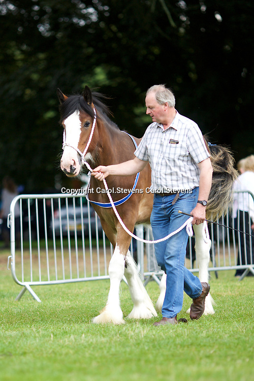 Kate Smith's BIRCHWOOD BRAMBLE <br /> 1st  Yearling Class