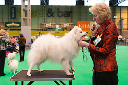 © Licensed to London News Pictures. 10/03/2016. A judges views a dog during a competition Crufts celebrates its 12th anniversary as the Worlds largest dog show. Birmingham, UK. Photo credit: Ray Tang/LNP