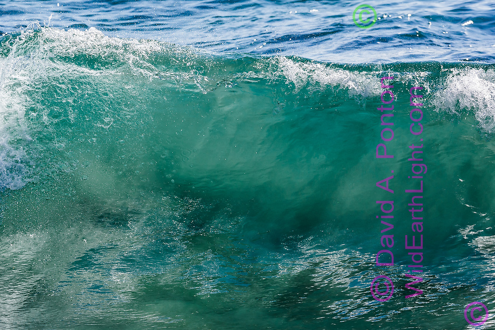 Sunlight penetrates the upper side of a breaking wave and forms rays in seawater. Kauai, © 2010 David A. Ponton
