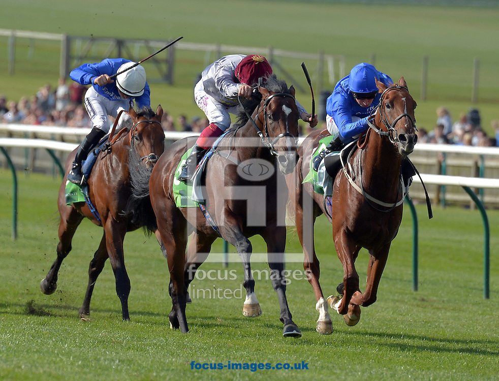A preview of this weekend's favourites in UK racing.<br /> Picture by Martin Lynch/Focus Images Ltd 07501333150<br /> 13/10/2016<br /> <br /> <br /> Original Caption:<br /> Shalaa with Frankie Dettori wins from right Buratino 2nd in Middle park stakes at Newmarket 26-9-15.