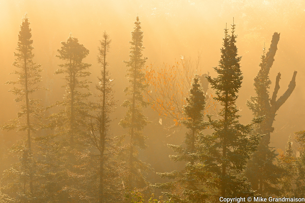 Trees in morning fog near Montreal Hill<br /> South of Lake Superior Provincial Park<br /> Ontario<br /> Canada