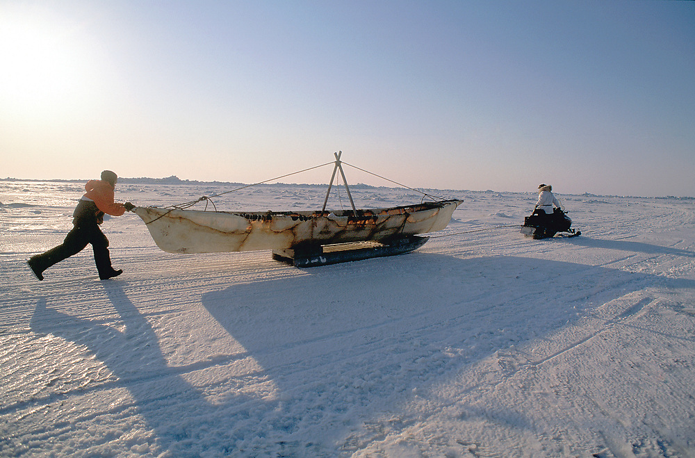 Snowmachine pulling umiak on a sled across the frozen sea ice to open water beyond for the whaling season