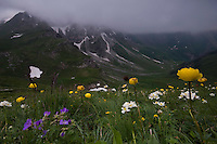 Wild Flower Meadows, Augstenberg, Liechtenstein