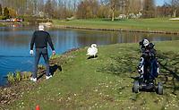VIJFHUIZEN - Haarlemmermeersche Golf Club  . Zwaan in het spel. waterhindernis, druppen, drop, COPYRIGHT KOEN SUYK