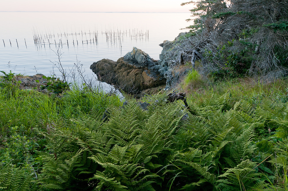 A fishing weir near North Head, Grand Manan Island, New Brunswick, Cananda. Weir fishing is an ancient form of fishing that relies on local knoledge of currents and tides. Photo by William Drumm.