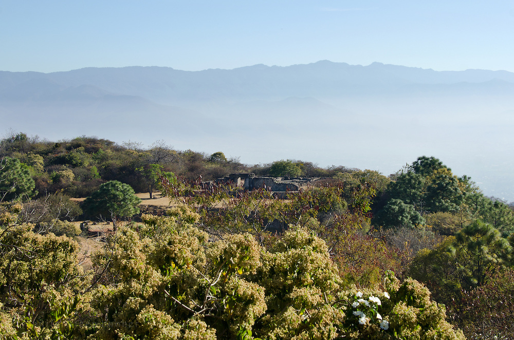 Tomb 7 is almost hidden among the trees at Monte Alban, Oaxaca, Mexico.