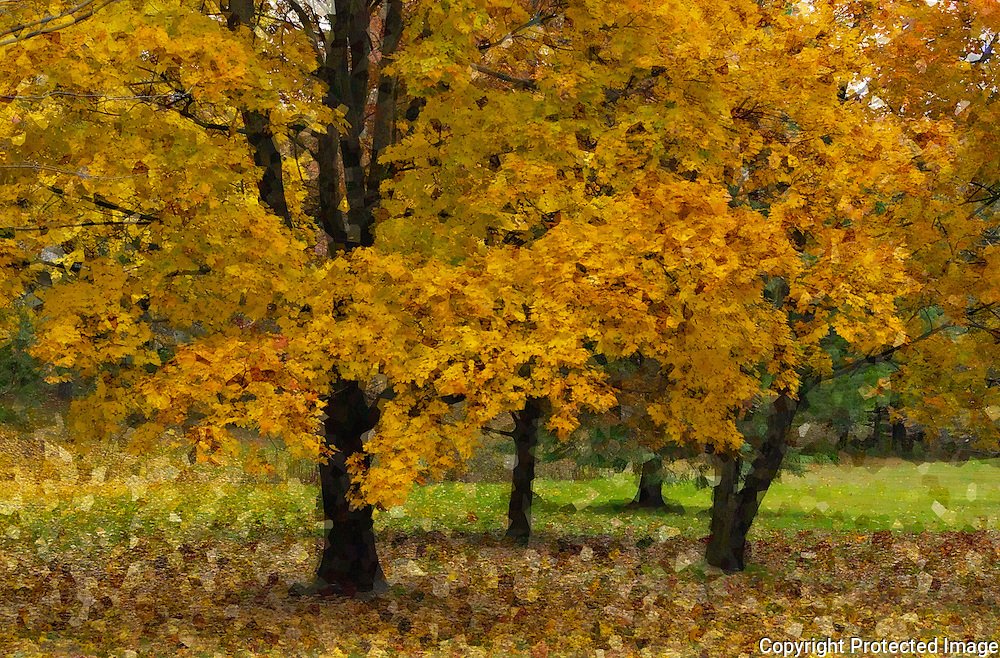 Yellow Leafs and trees in the Park