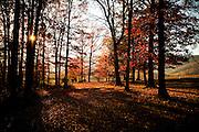 Autumn foliage around a farm in the Shenandoah Valley outside Charlottesville, Virginia, USA