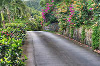 Flowers dot the landscape of Peter Bay Rd. on the island of St. John, United States Virgin Islands.