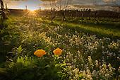 Biodynamic & organic wine gallery