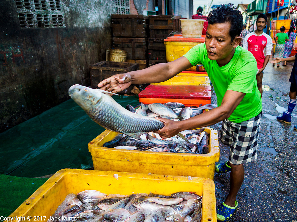 23 NOVEMBER 2017 - YANGON, MYANMAR: A man sorts fish in the San Pya Fish Market. San Pya Fish Market is one of the largest fish markets in Yangon. It's a 24 hour market, but busiest early in the morning. Most of the fish in the market is wild caught but aquaculture is expanding in Myanmar and more farmed fresh water fish is being sold now than in the past.    PHOTO BY JACK KURTZ
