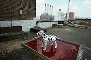 New York.  dog and red blood, DUMBO area, artist studio in Brooklyn; work by Zabo videast  (french)  New York - United States /   chien et liquide ensanglante, Dumbo, atelier d'artistes à Brooklyn;  ZABO  New York - Etats Unis